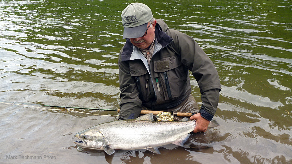 picture, Mark Bachmann with a Chinook salmon caught while spey fishing